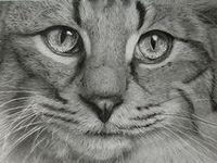 Tema: Los gatos y el arte 4