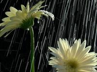 Rainy Days Relax Me!