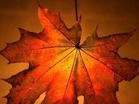 Falling Into Autumn