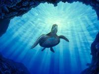 Deepest Ocean Blue