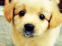 Fun, funny, and cute videos and pics of dogs!