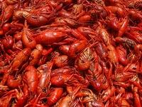 Lovin' All Things Louisiana
