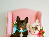 Frenchies & Bulldoggies