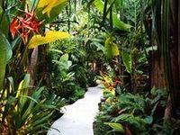 Tropical garden design. Tropical landscaping. Tropical garden plants. Balinese garden statues.