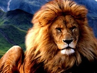 wild and in captivity big cats