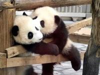 Sweet fluffy pandas and panda items!