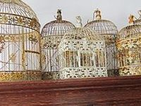 Birdcages and Aviaries