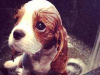 Help homeless & helpless animals