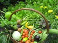 Patio Gardening Ideas