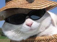 cats -  white