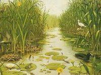 Vízi élővilág / Water habitat