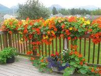 a fun & easy gardening