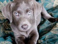 Pets and Furry Four Legged Love