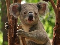 Follow my Australian blog on tumblr: www.australiangood.tumblr.com