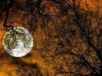 Moon Light.  Moon Dance.  Like magic, appearing each month.  Hauntingly beautiful.