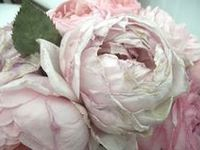 I love pink antique roses. They are my favorite.
