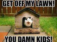 Grumpy Cat & Funny Kittys