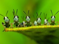 Nature: Jolis bestioles / Pretty Pests