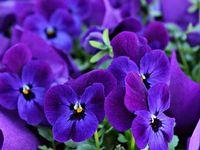 Purple, my favorite color