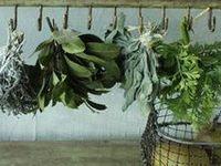 garden  of herbs