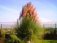 bitki - plant