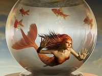 Merfolk & Selkies