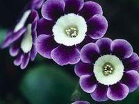 Floral Splendor