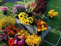 The Business of Flowers: Books, Websites, Other Tools