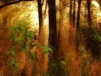 Drzewa, lasy