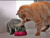 Cat humor, Cat funny, baby Cat. Follow me to discover amazing funny Cat pictures every day.
