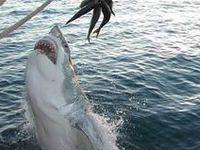 Shark bait ooo, ha, ha