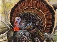 LOVE Thanksgiving......Turkeys, Turkeys, Turkeys, Beautiful Fall, Thanksgiving Day, And FAMILY!