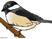 Thema vogels kleuters / Theme birds preschool