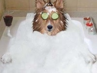 DIY dog shampoo recipes, ingredients, and some cute wet dog (Awww....) pix ;)