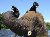 #animal #animals #cat #dog #zoo #love #sweet #fuzzyfriends #fuzzy