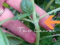 Gardening Plant Information