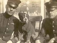 Wartime animals