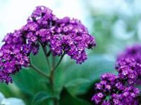 Add new colors and textures to your garden with our favorite annuals, perennials and shade plants!
