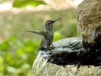 BIRDS,Aves
