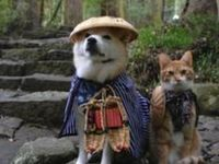 Lovely Cats & Dogs