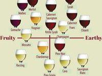 Florida breweries & wineries/ vineyards