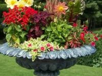 Container Gardens & Window Boxes