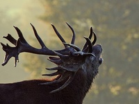 Native People, Animal Totems, Sacred Ground, Endless Sky