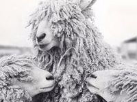 FLEECE & wool make yarn so:
