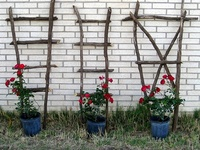 Branches~Trellis~Cage~Stakes~Fence