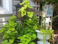 Flowering/Gardening