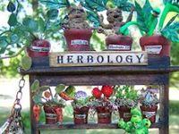 Botany & herbal medicine Nature's Alchemy