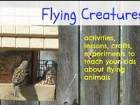 hands on activities to learn about Flying creatures, experiments, lessons and more for your classroom or homeschool for Apologia