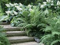 """Gardens are not made by singing 'Oh, how beautiful!' and sitting in the shade."" 