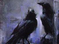 Corvids - Crows & Ravens